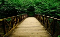 Bridge-Bridges-Nature-Forest-Forests-Wallpaper-1280x800-2